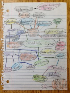 a mind-map about coral by Kiri